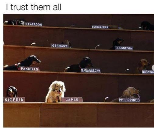 Dog - I trust them all CAMEROON SOUTH AFRICA GERMANY INDONESIA PAKISTAN MADAGASCAR BURKINA NIGERIA JAPAN PHILIPPINES