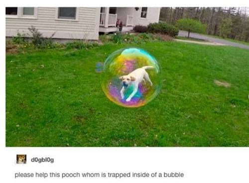 Yard - dogblog please help this pooch whom is trapped inside of a bubble