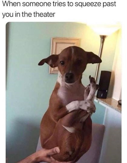 Dog - When someone tries to squeeze past you in the theater