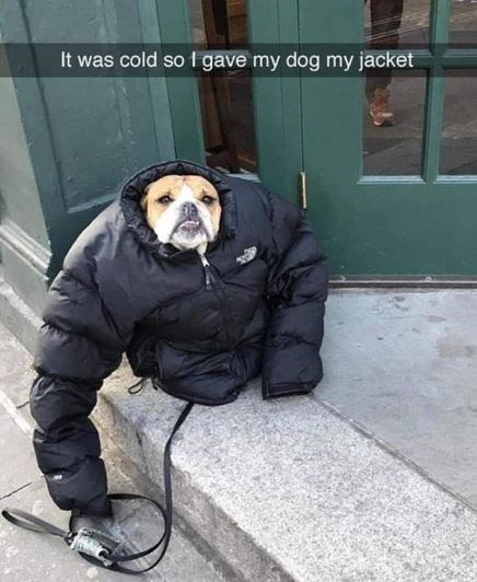 Photography - It was cold so 1 gave my dog my jacket