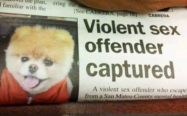 funny advertisement - Pomeranian - plan, ering the s familiar with the See CABRERA, page CABRERA Violent sex offender captured A violent sex offender who escape from a San Mateo County mental health