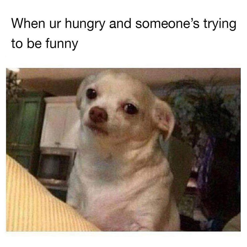 meme - Dog - When ur hungry and someone's trying to be funny
