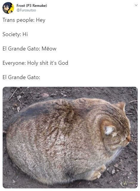 transphobia - Cat - Frost (P3 Remake) @Furosutoo Trans people: Hey Society: Hi El Grande Gato: Meow Everyone: Holy shit it's God El Grande Gato: KW
