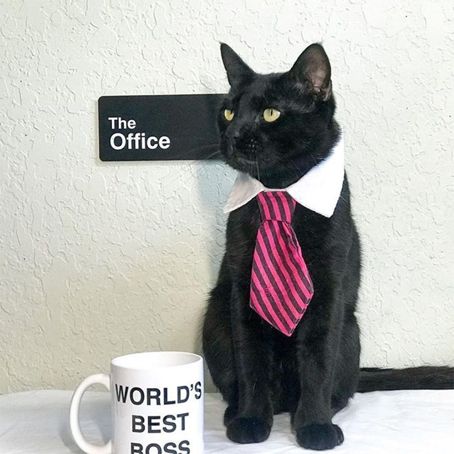 Cat - The Office WORLD'S BEST