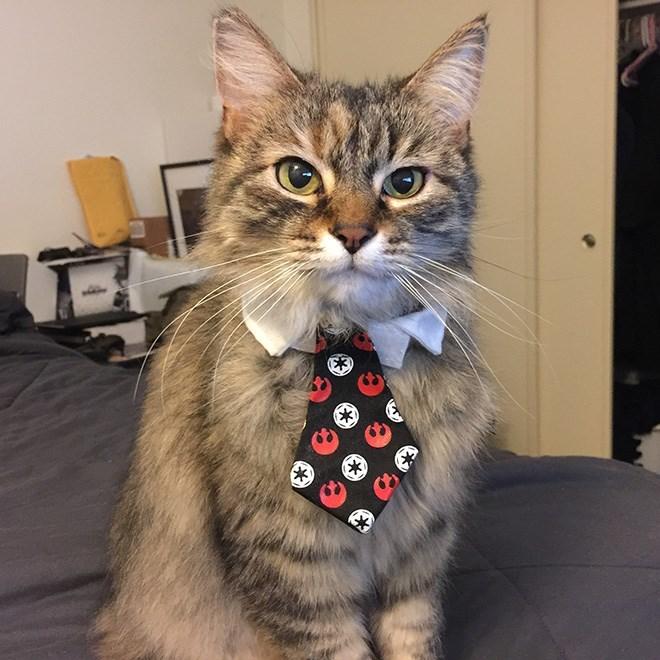 Cat - (X)