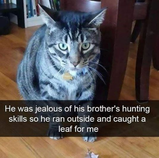 Cat - He was jealous of his brother's hunting skills so he ran outside and caught a leaf for me