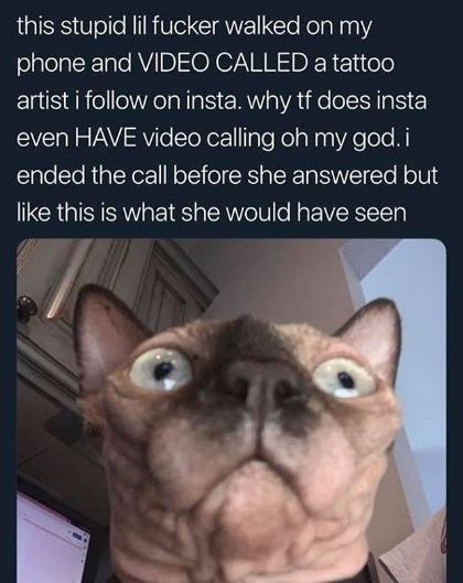 Cat - this stupid lil fucker walked on my phone and VIDEO CALLED a tattoo artist i follow on insta. why tf does insta even HAVE video calling oh my god.i ended the call before she answered but like this is what she would have seen