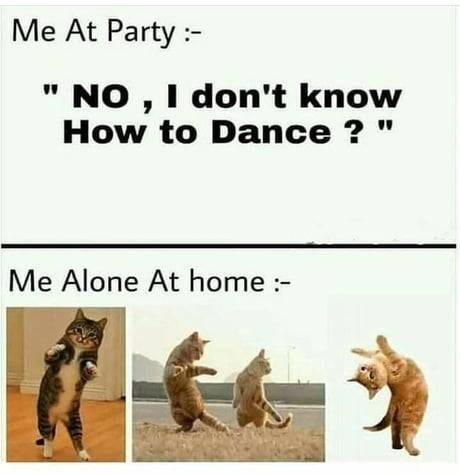 cat memes - 9355341056