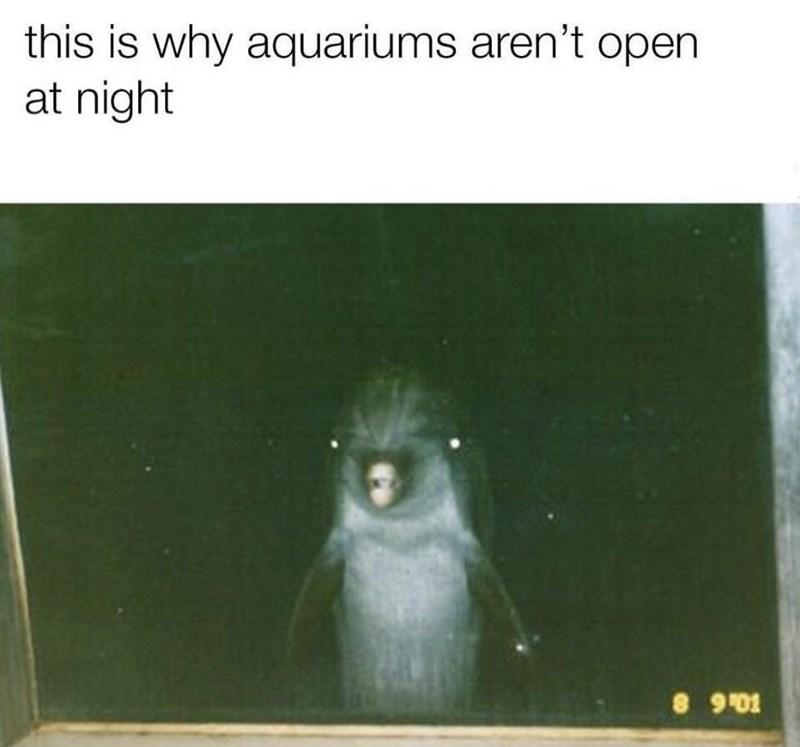 animal memes - 9355341312