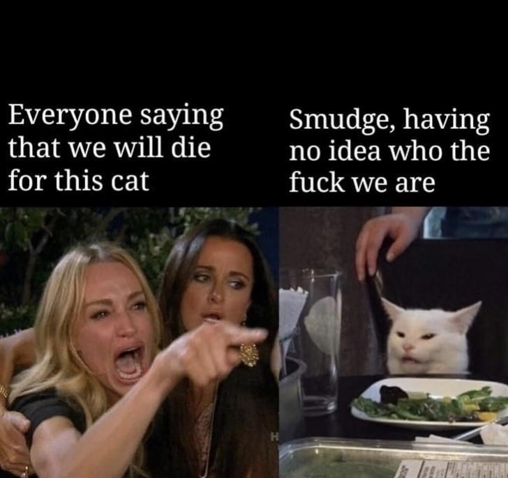 Facial expression - Everyone saying that we will die for this cat Smudge, having no idea who the fuck we are
