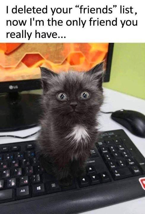 cat memes - 9355454976