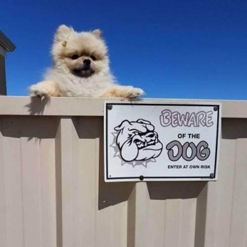 Dog - BENARE OF THE ENTER AT OWN RSK
