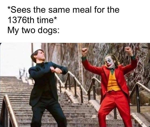 joker peter parker - Fictional character - *Sees the same meal for the 1376th time* My two dogs: