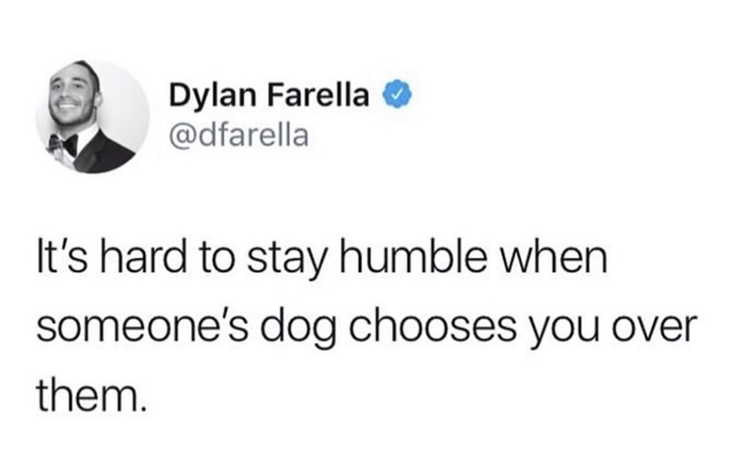 meme - Text - Dylan Farella @dfarella It's hard to stay humble when someone's dog chooses you over them.