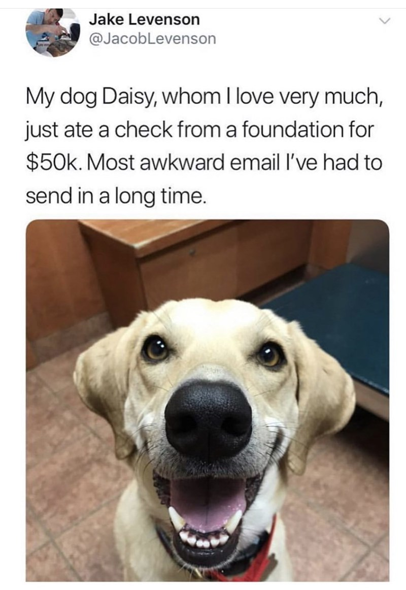 meme - Dog - Jake Levenson @JacobLevenson My dog Daisy, whom I love very much, just ate a check from a foundation for $50k. Most awkward email I've had to send in a long time.