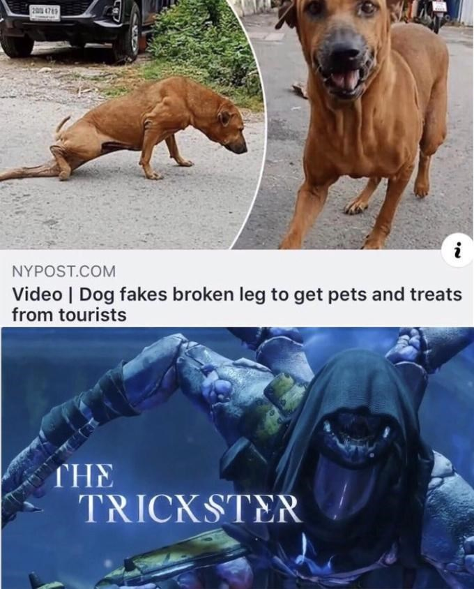 """Funny meme that reads, """"Dog fakes broken leg to get pets and treats from tourists; THE TRICKSTER"""""""