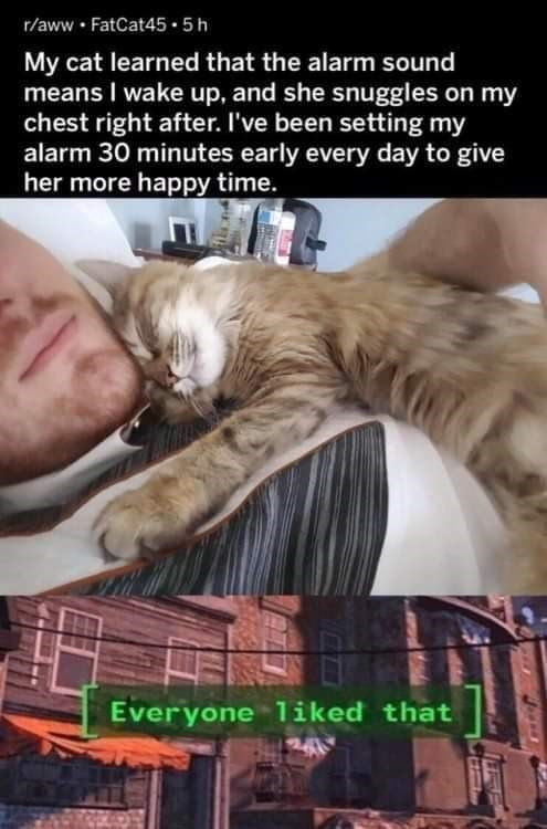 meme - Cat - r/aww FatCat45.5 h My cat learned that the alarm sound means I wake up, and she snuggles on my chest right after. I've been setting my alarm 30 minutes early every day to give her more happy time. Everyone liked that