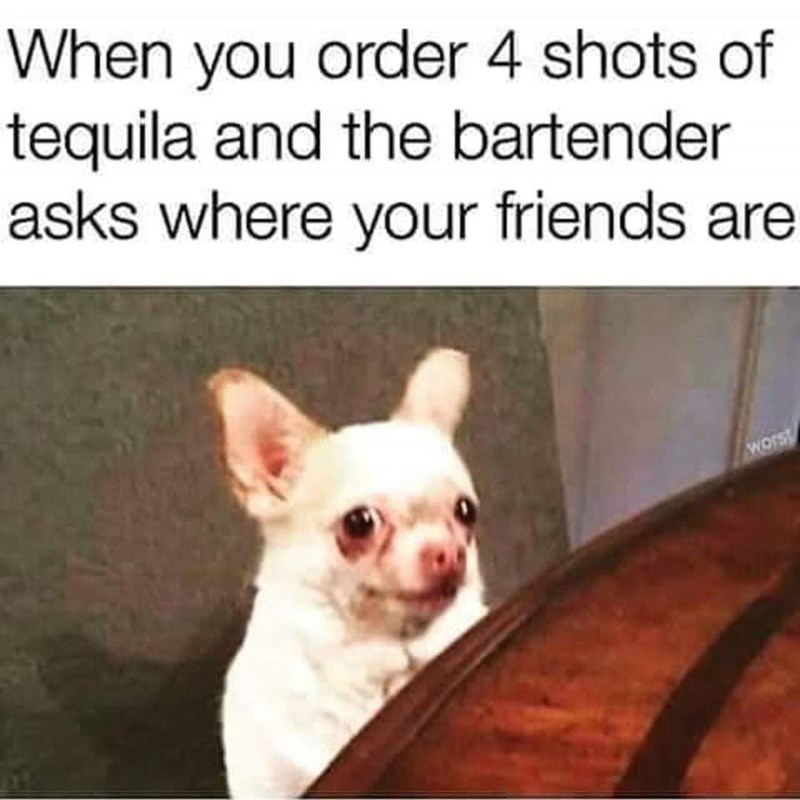 meme - Dog breed - When you order 4 shots of tequila and the bartender asks where your friends are Wors