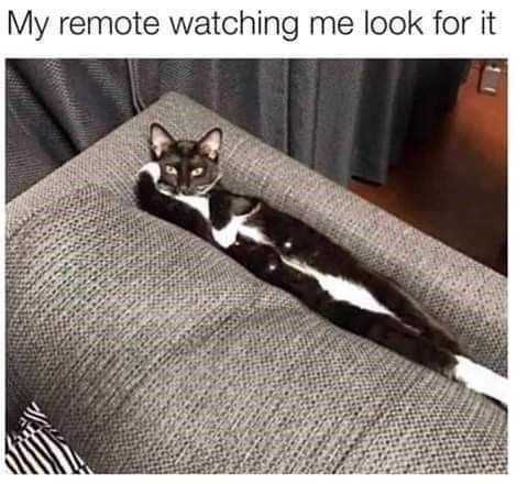meme - Cat - My remote watching me look for it