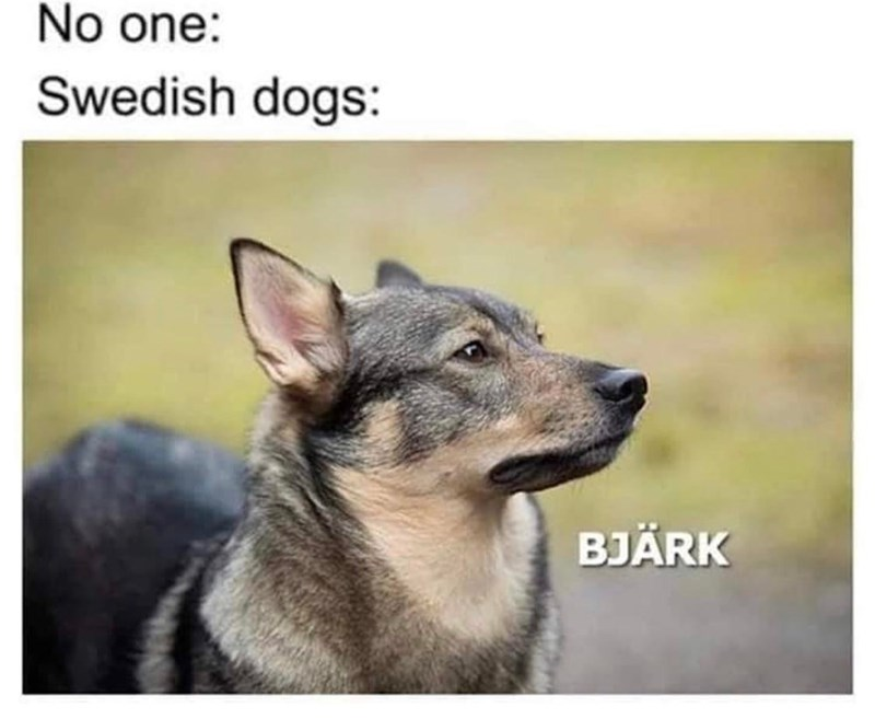meme - Mammal - No one: Swedish dogs: BJÄRK