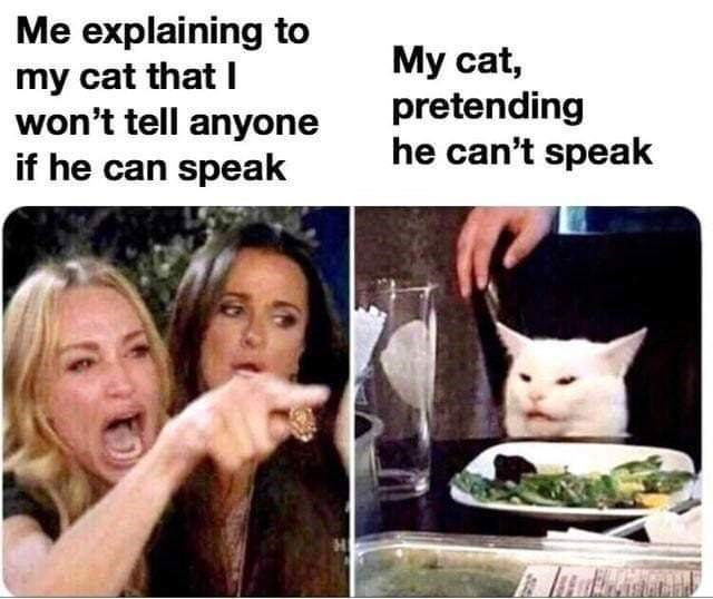 meme - Facial expression - Me explaining to my cat that I won't tell anyone if he can speak My cat, pretending he can't speak