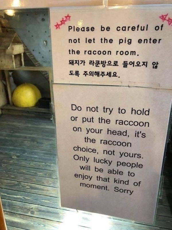 signs - Text - Please be careful of not let the pig enter the racoon room. 돼지가 라쿤방으로 들어오지 않 도록 주의해주세요. Do not try to hold or put the raccoon on your head, it's the raccoon choice, not yours. Only lucky people will be able to enjoy that kind of moment. Sorry