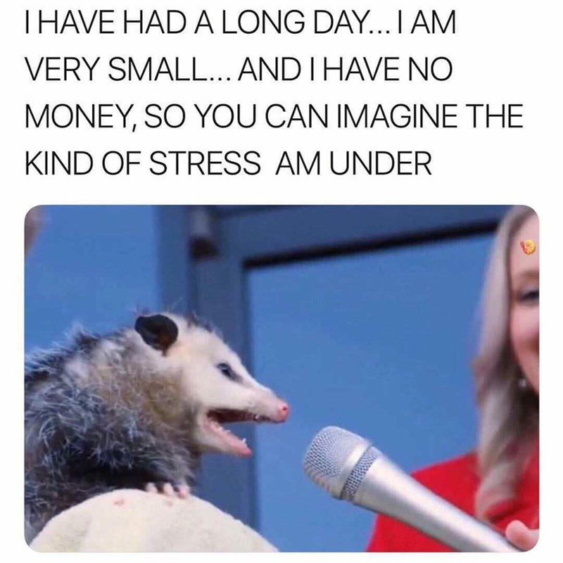 animal meme - Adaptation - THAVE HAD A LONG DAY... I AM VERY SMALL... AND I HAVE NO MONEY, SO YOU CAN IMAGINE THE KIND OF STRESS AM UNDER