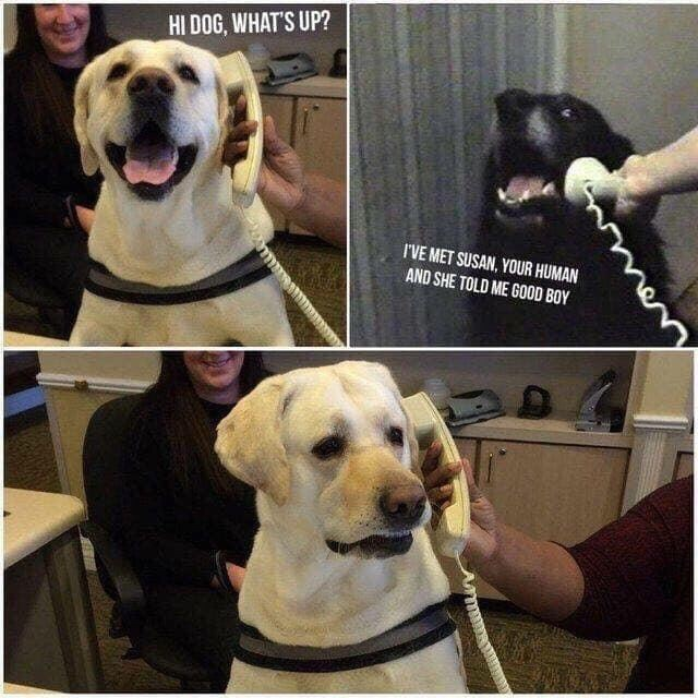animal meme - Dog - HI DOG, WHAT'S UP? I'VE MET SUSAN, YOUR HUMAN AND SHE TOLD ME GOOD BOY