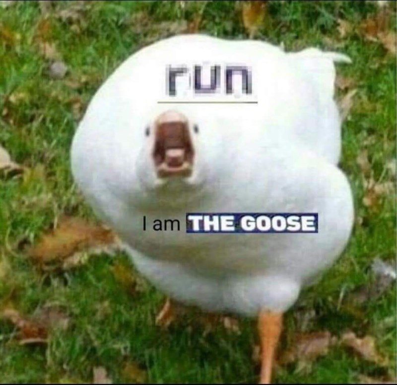 animal meme - Goose - run I am THE G0OSE