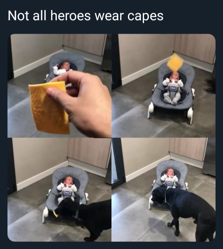 animal meme - Hand - Not all heroes wear capes