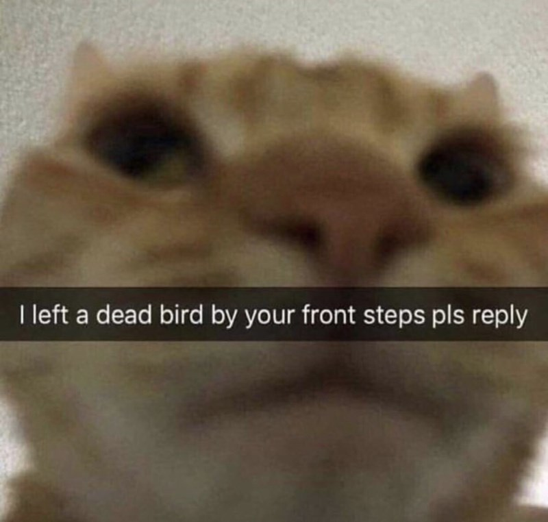 animal meme - Nose - I left a dead bird by your front steps pls reply