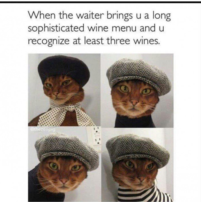 animal meme - Head - When the waiter brings u a long sophisticated wine menu and u recognize at least three wines. @thezenpig