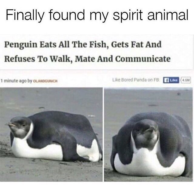 animal meme - Adaptation - Finally found my spirit animal Penguin Eats All The Fish, Gets Fat And Refuses To Walk, Mate And Communicate Like Bored Panda on FB: 4GM 1 minute ago by OLANDGUNICH Like