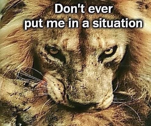 cropped boomer meme - Wildlife - Don't ever put me in a situation
