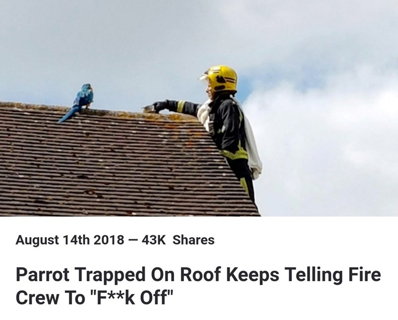 "Funny headline that reads, ""Parrot trapped on roof keeps telling fire crew to 'f**k off'"""