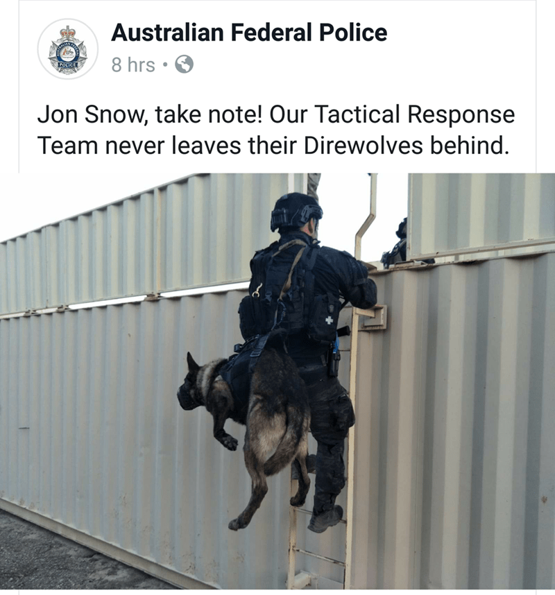 Horse - Australian Federal Police 8 hrs POLICE Jon Snow, take note! Our Tactical Response Team never leaves their Direwolves behind.