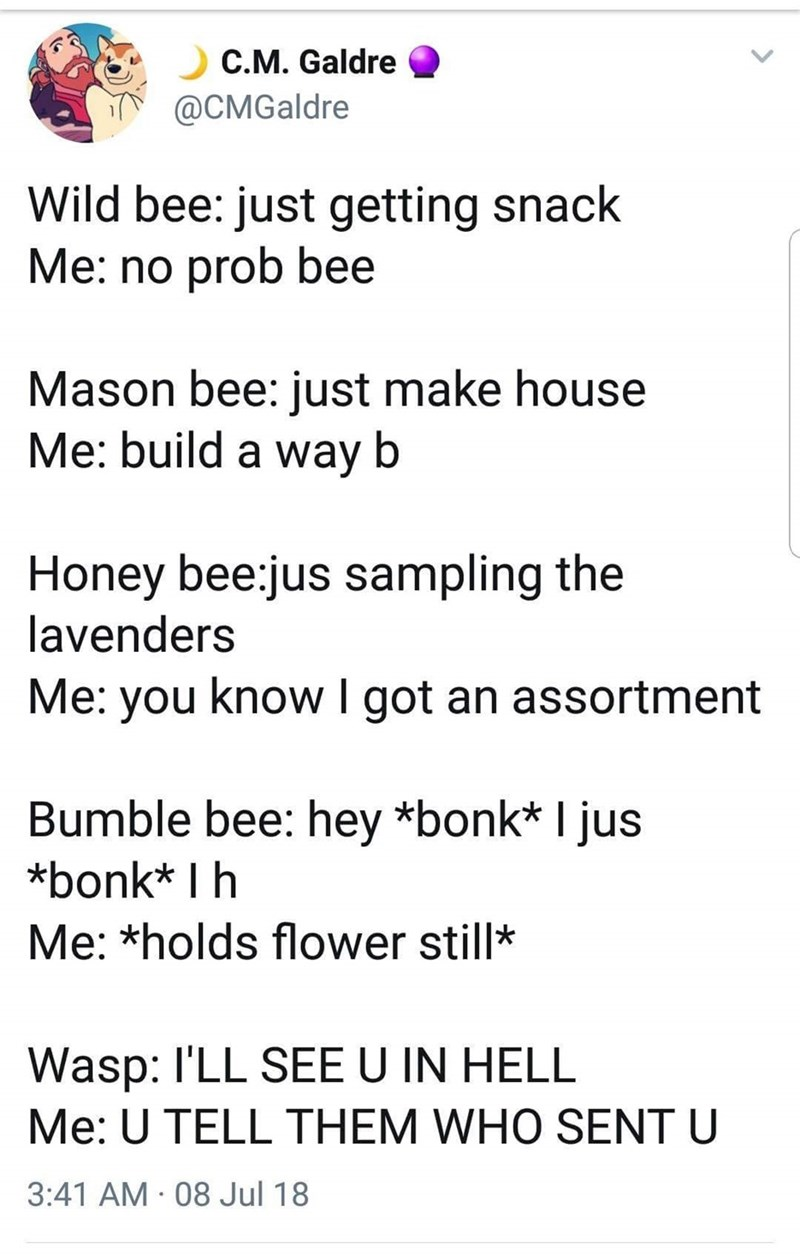 Text - C.M. Galdre @CMGaldre Wild bee: just getting snack Me: no prob bee Mason bee: just make house Me: build a way b Honey bee jus sampling the lavenders Me: you know I got an assortment Bumble bee: hey *bonk* I jus *bonk* I h Me: *holds flower still* Wasp: I'LL SEEU IN HELL Me: U TELL THEM WHO SENT U 3:41 AM 08 Jul 18