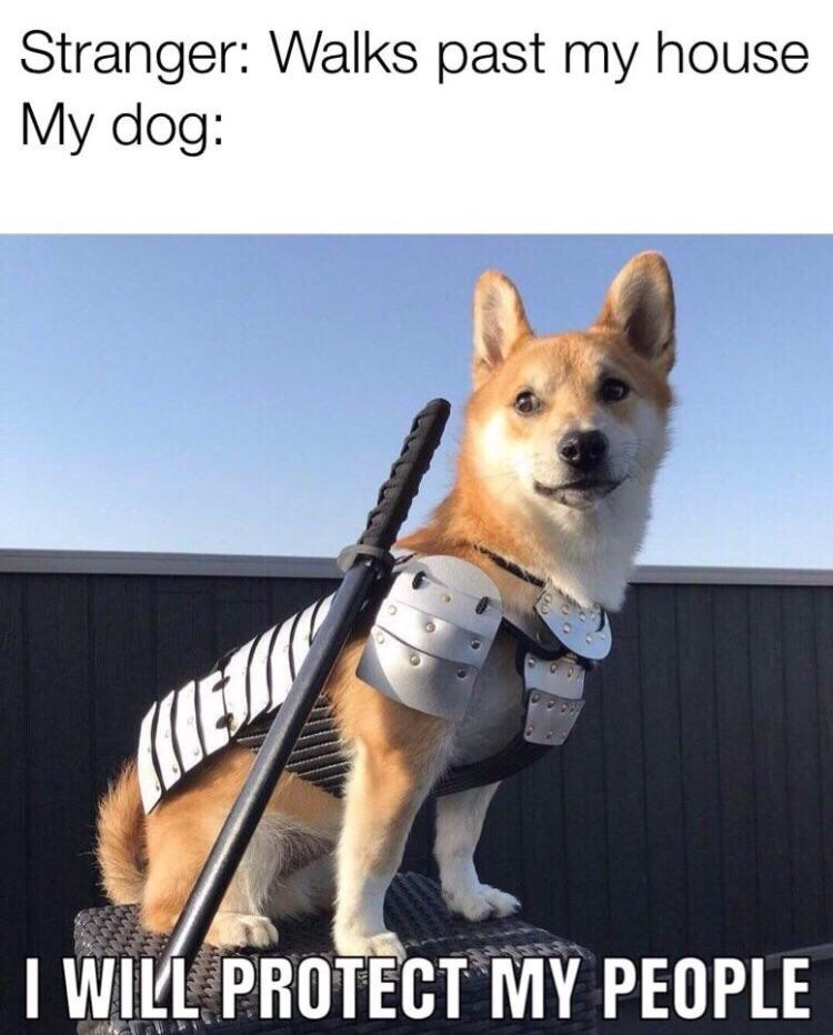 Dog - Stranger: Walks past my house My dog: I WILL PROTECT MY PEOPLE