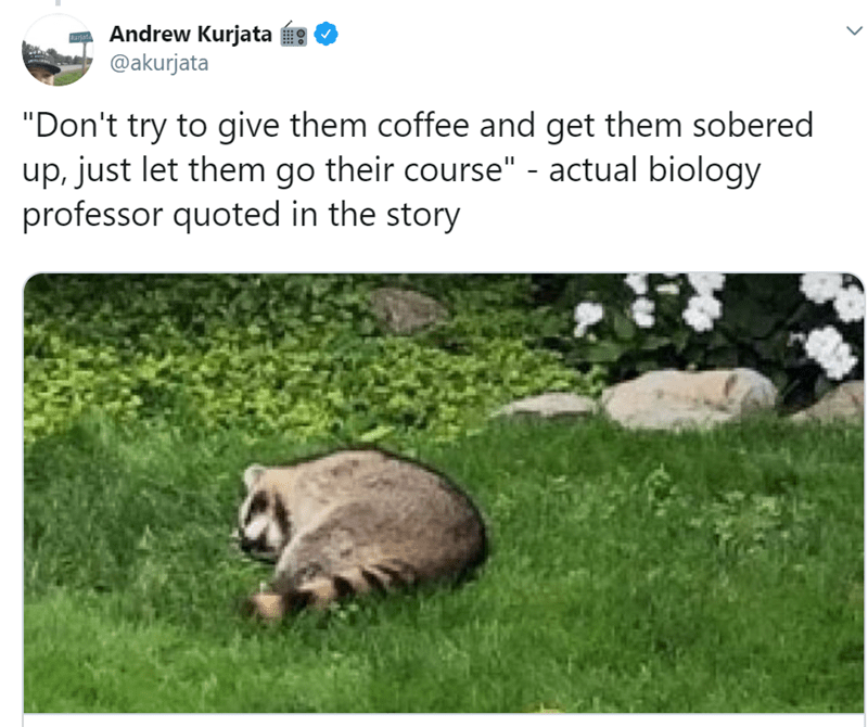 "Adaptation - Andrew Kurjata @akurjata Kartate ""Don't try to give them coffee and get them sobered up, just let them go their course"" - actual biology professor quoted in the story"