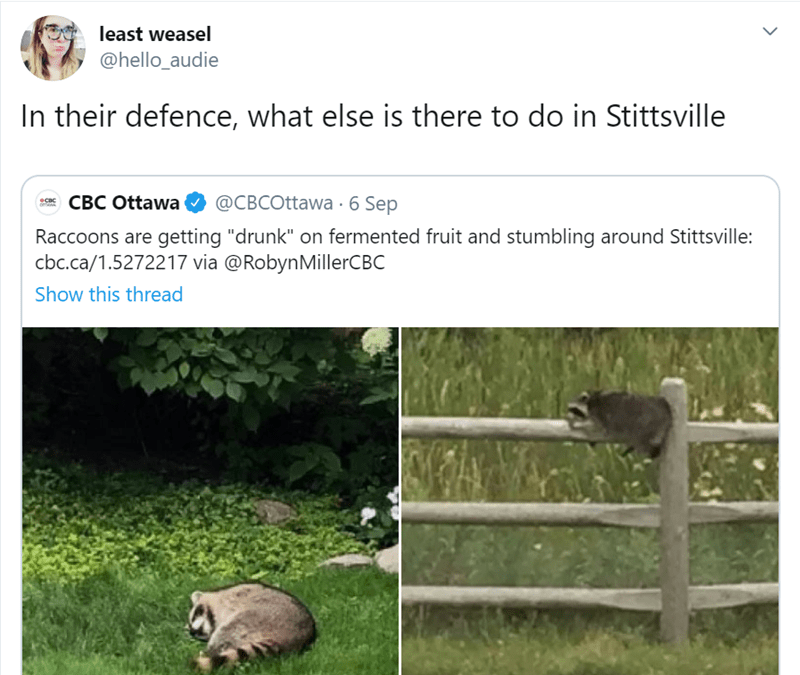 "Adaptation - least weasel @hello_audie In their defence, what else is there to do in Stittsville CBC Ottawa @CBCOttawa 6 Sep oTaw Raccoons are getting ""drunk"" on fermented fruit and stumbling around Stittsville: cbc.ca/1.5272217 via @RobynMillerCBC Show this thread"