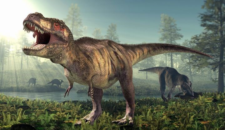picture t-rex roaring standing in forest