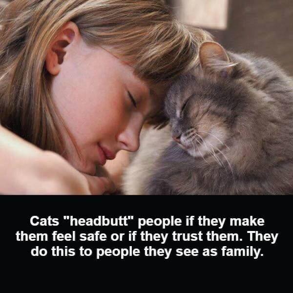 cat memes - 9356574720