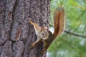 squirrel climbing tree trunk