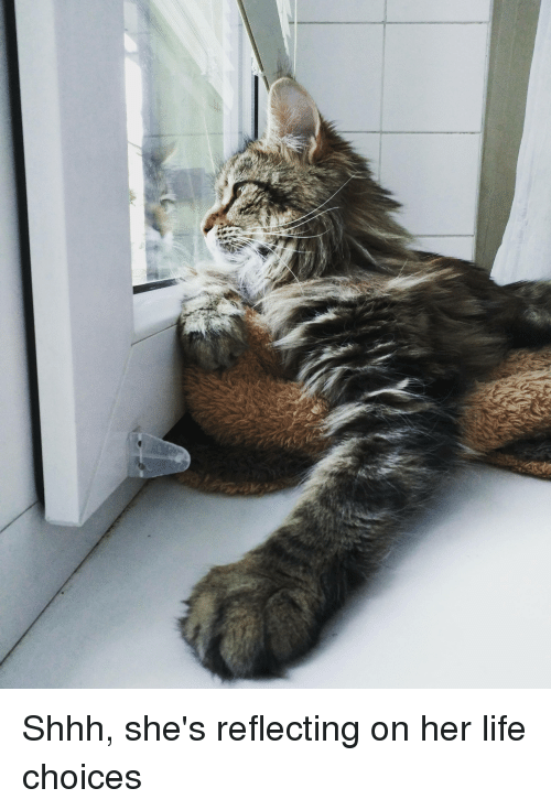 Cat - Shhh, she's reflecting on her life choices