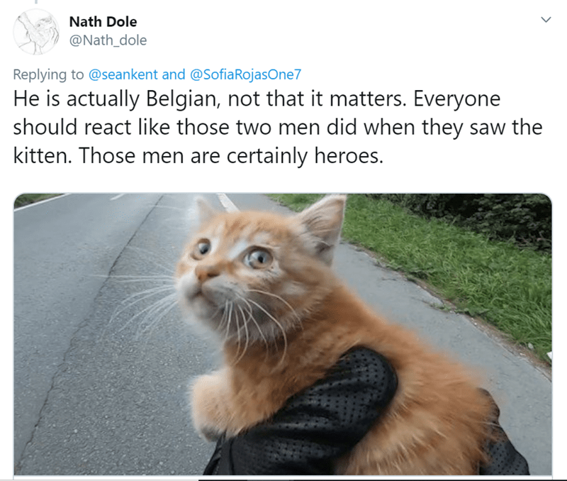 Cat - Nath Dole @Nath_dole Replying to @seankent and @SofiaRojasOne7 He is actually Belgian, not that it matters. Everyone should react like those two men did when they saw the kitten. Those men are certainly heroes.