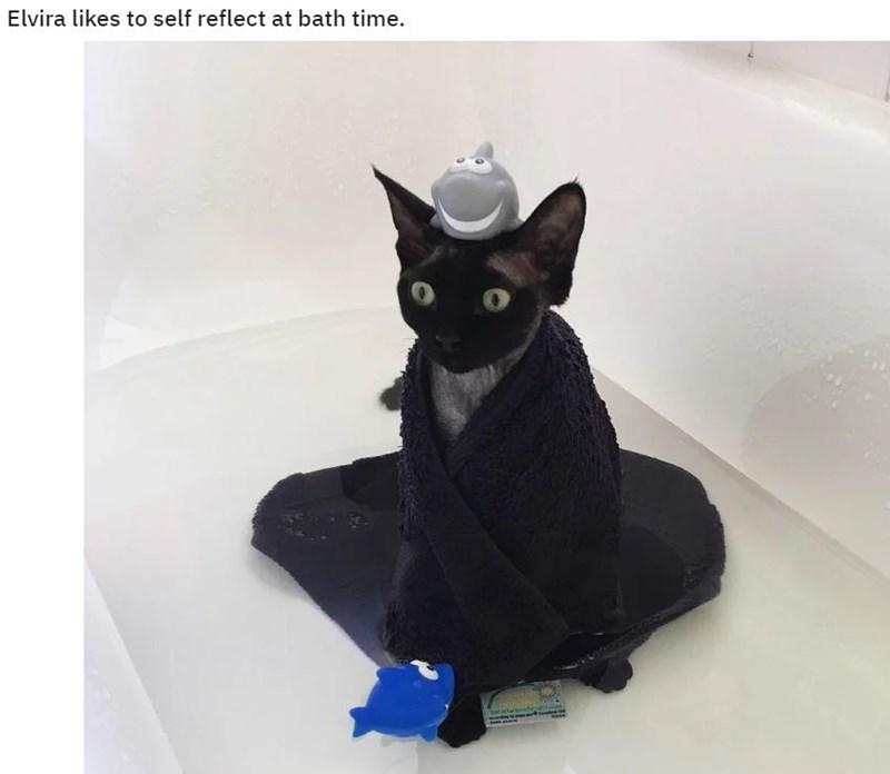 Cat - Elvira likes to self reflect at bath time.