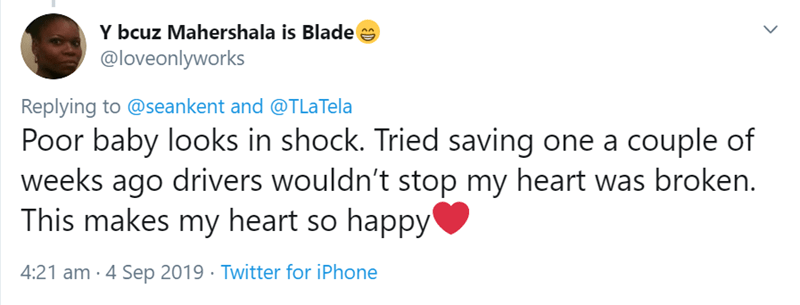 Text - Y bcuz Mahershala is Blade @loveonlyworks Replying to @seankent and @TLaTela Poor baby looks in shock. Tried saving one a couple of weeks ago drivers wouldn't stop my heart was broken. This makes my heart so happy 4:21 am 4 Sep 2019 Twitter for iPhone