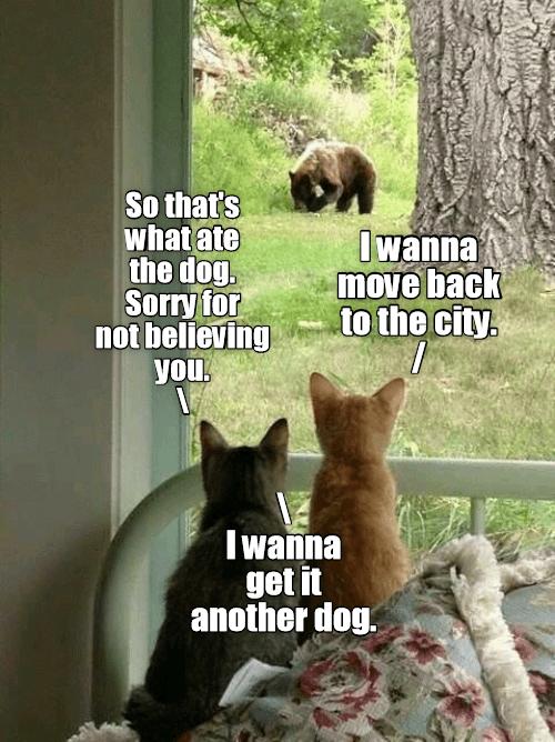 City Cats Meet Country Life Lolcats Lol Cat Memes Funny