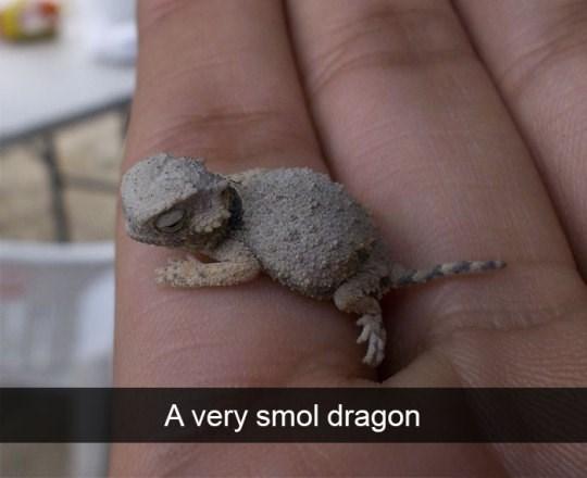 Lizard - A very smol dragon
