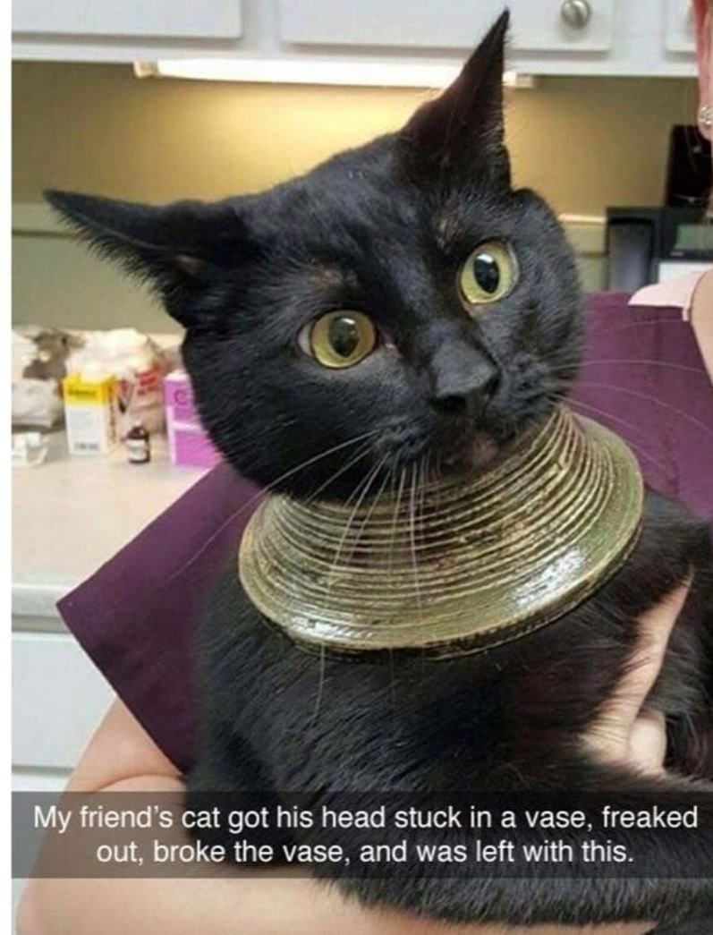 Cat - My friend's cat got his head stuck in a vase, freaked out, broke the vase, and was left with this.